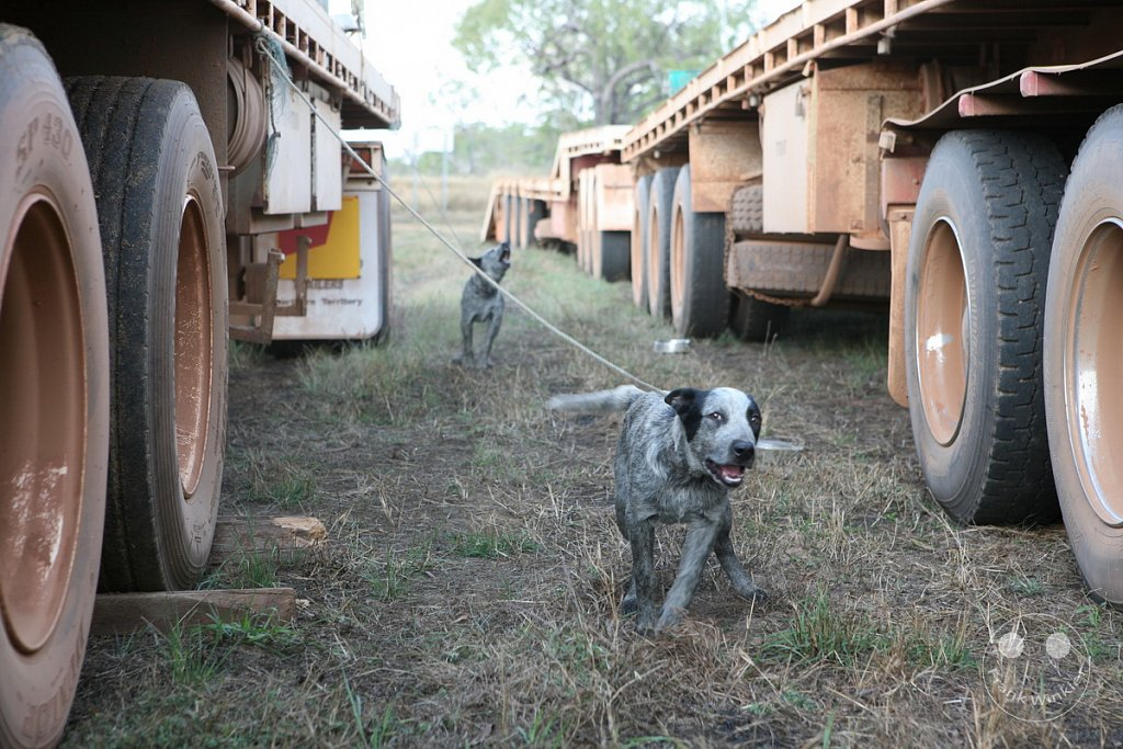 Road Train - Northern Territory - Grove Hill