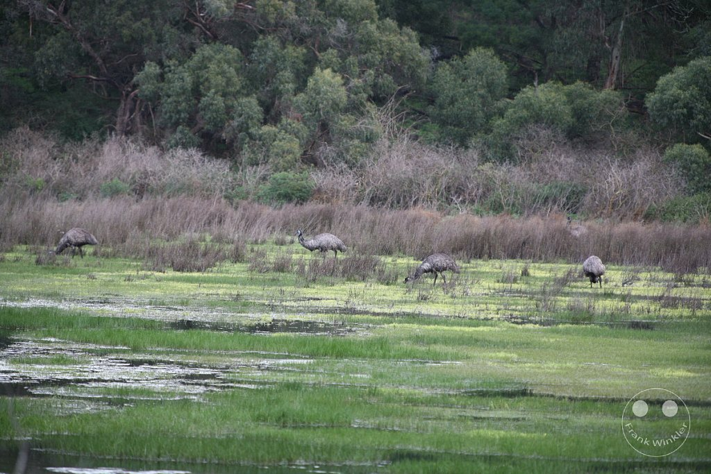 Tower Hill Wildlife Reserve - Victoria