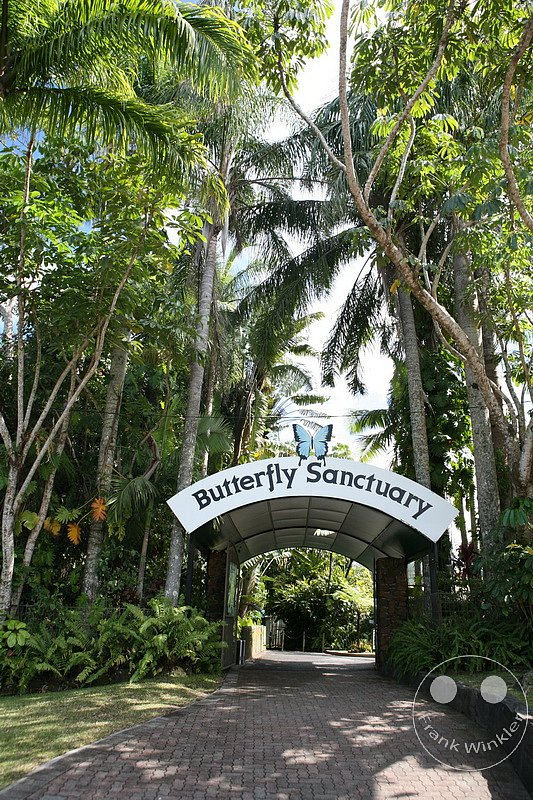 Queensland - Kuranda - Butterfly Sanctuary